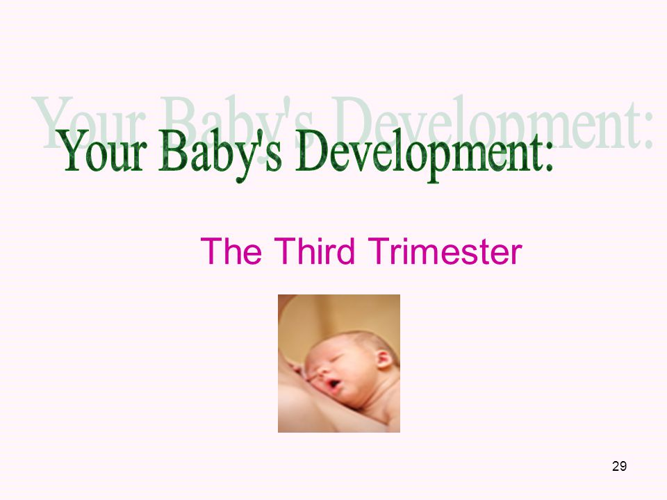 Your Baby s Development: