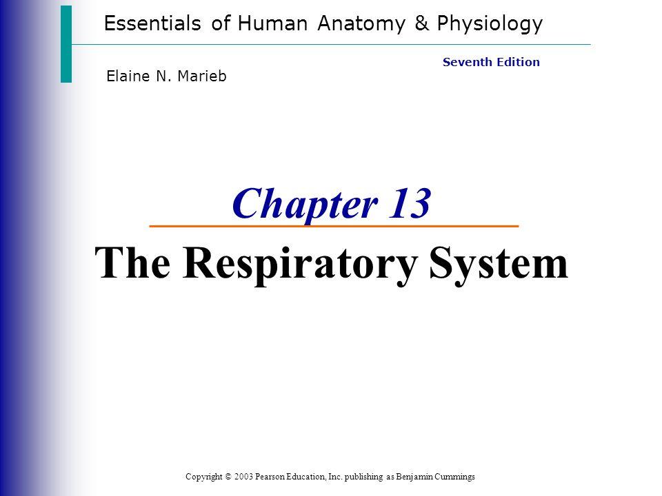 Wunderbar Kapitel 13 Anatomie Und Physiologie Antwortschlüssel Ideen ...