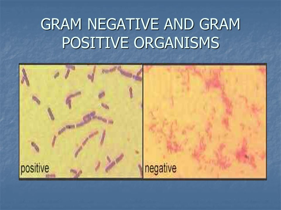 difference between gram positive and gram negative bacteria pdf