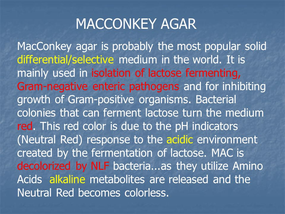 Enterobacter Aerogenes On Macconkey Agar ISOLATION, GRAM STAINI...