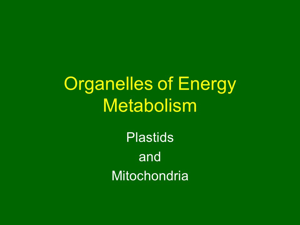 Organelles of Energy Metabolism