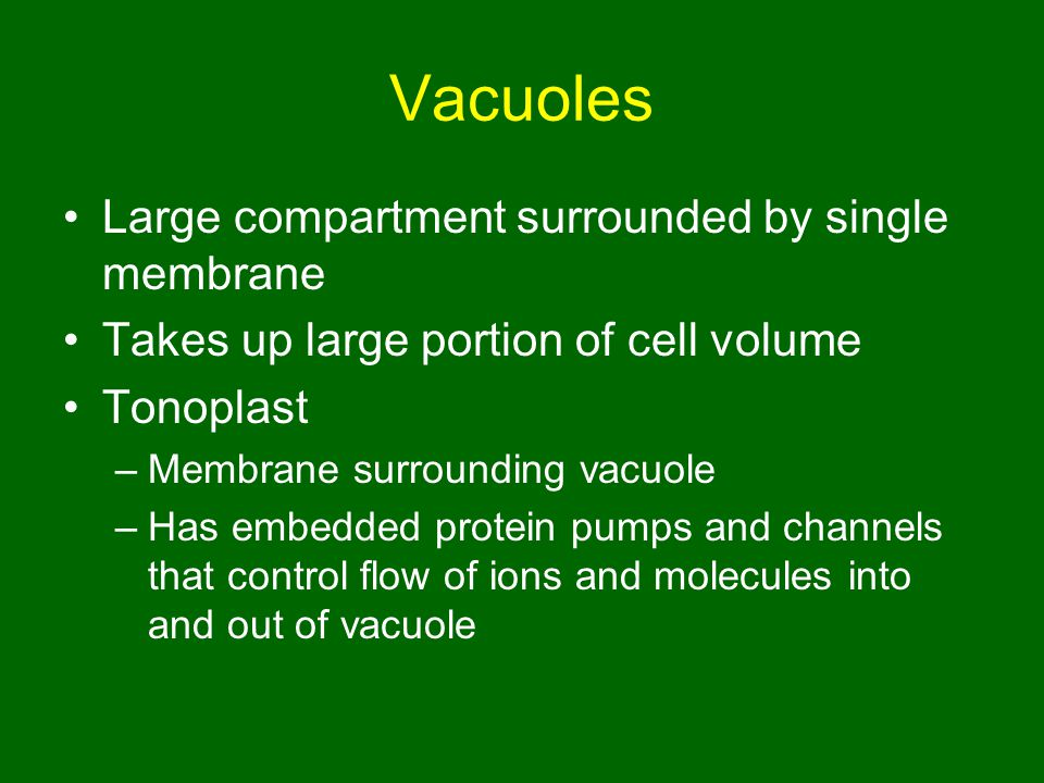 Vacuoles Large compartment surrounded by single membrane