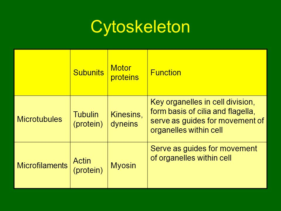 Cytoskeleton Subunits Motor proteins Function Microtubules