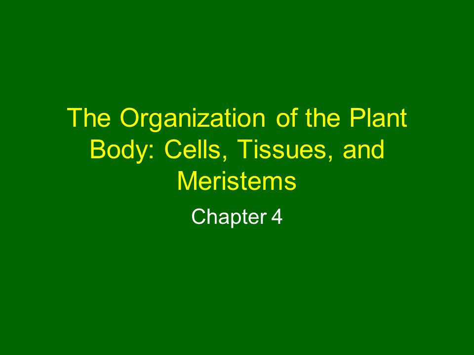 The Organization of the Plant Body: Cells, Tissues, and Meristems