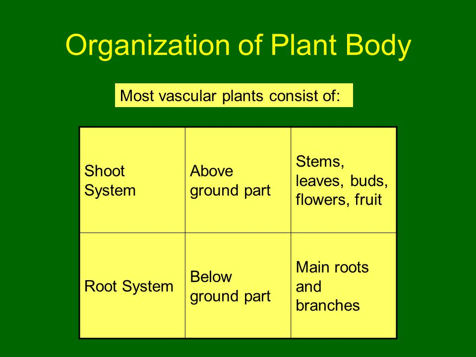 Organization of Plant Body