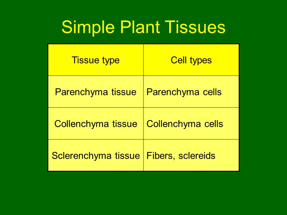 Simple Plant Tissues Tissue type Cell types Parenchyma tissue