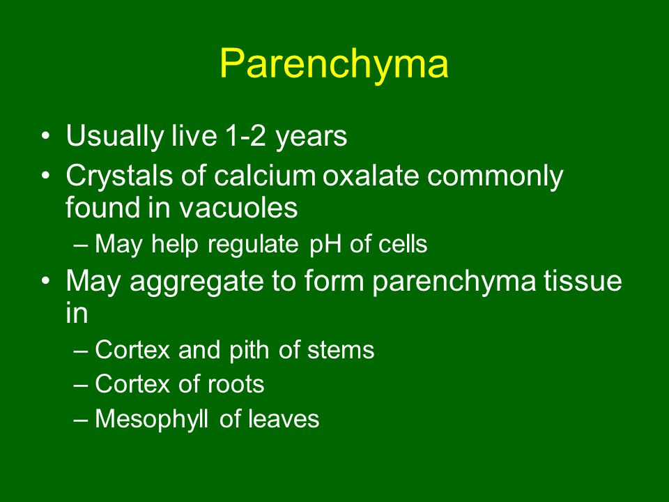 Parenchyma Usually live 1-2 years
