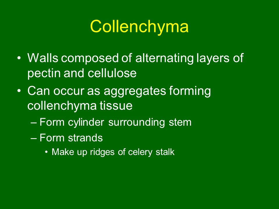 Collenchyma Walls composed of alternating layers of pectin and cellulose. Can occur as aggregates forming collenchyma tissue.