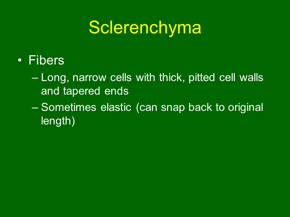 Sclerenchyma Fibers. Long, narrow cells with thick, pitted cell walls and tapered ends.