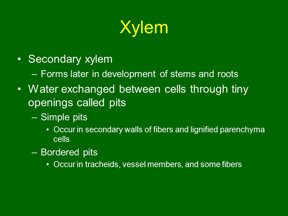 Xylem Secondary xylem. Forms later in development of stems and roots. Water exchanged between cells through tiny openings called pits.