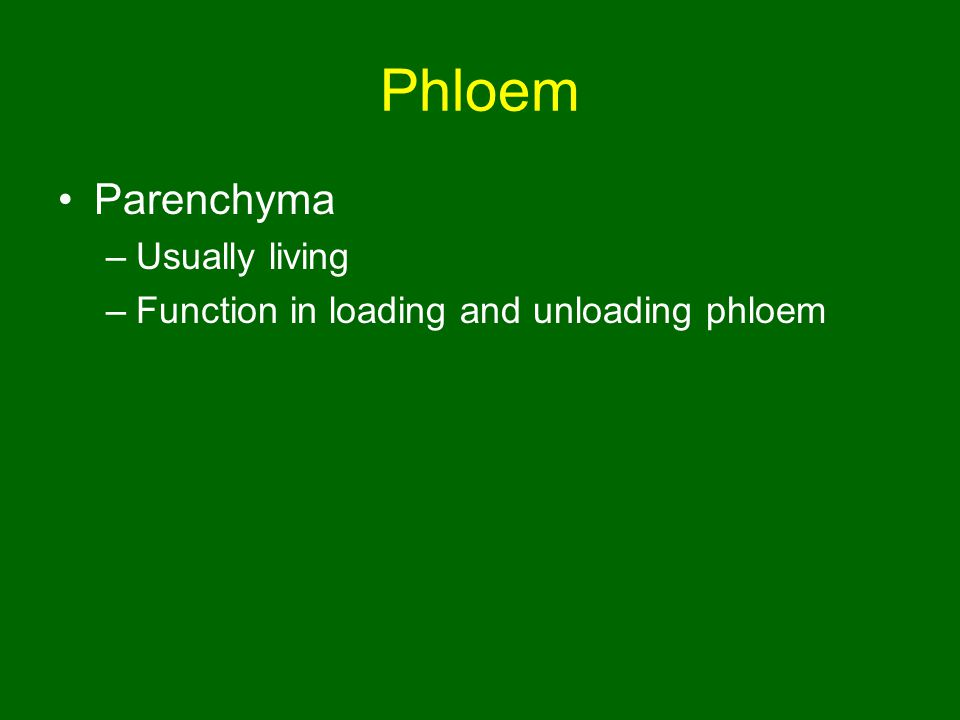 Phloem Parenchyma Usually living