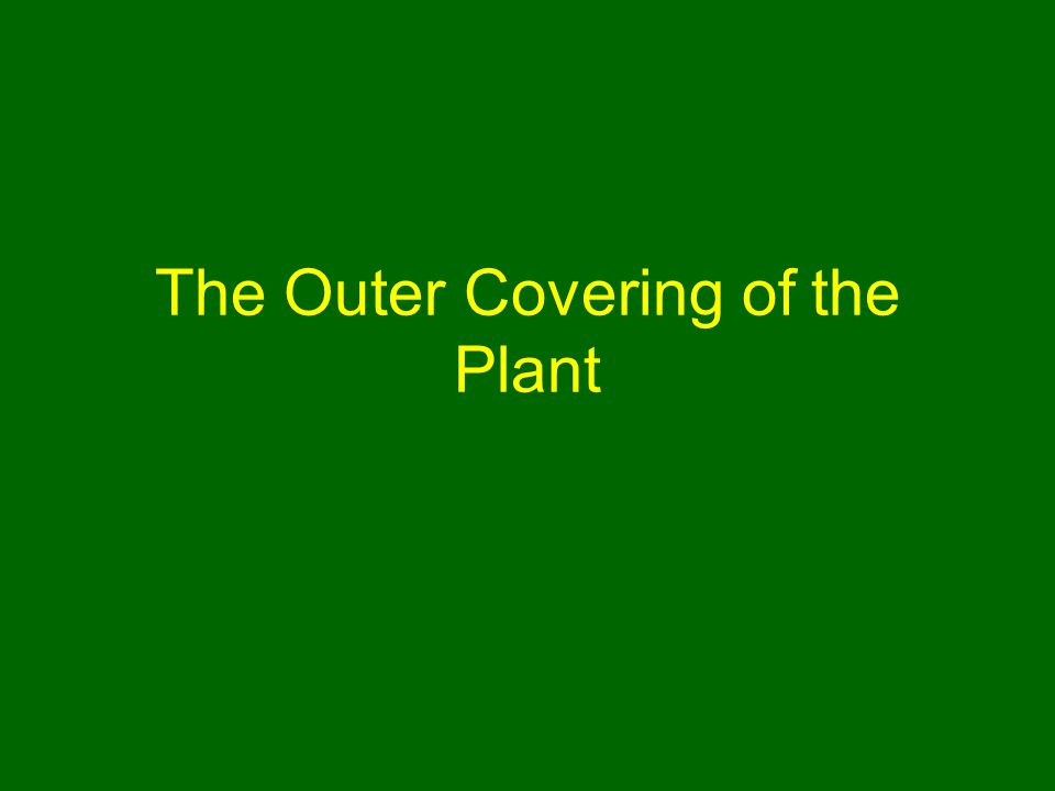 The Outer Covering of the Plant