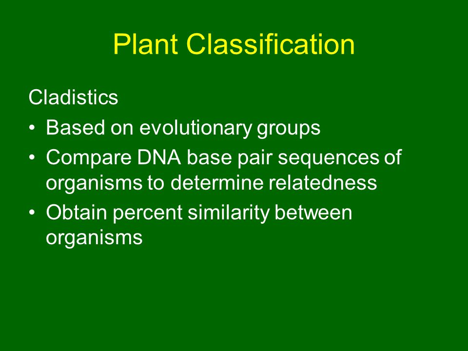 Plant Classification Cladistics Based on evolutionary groups