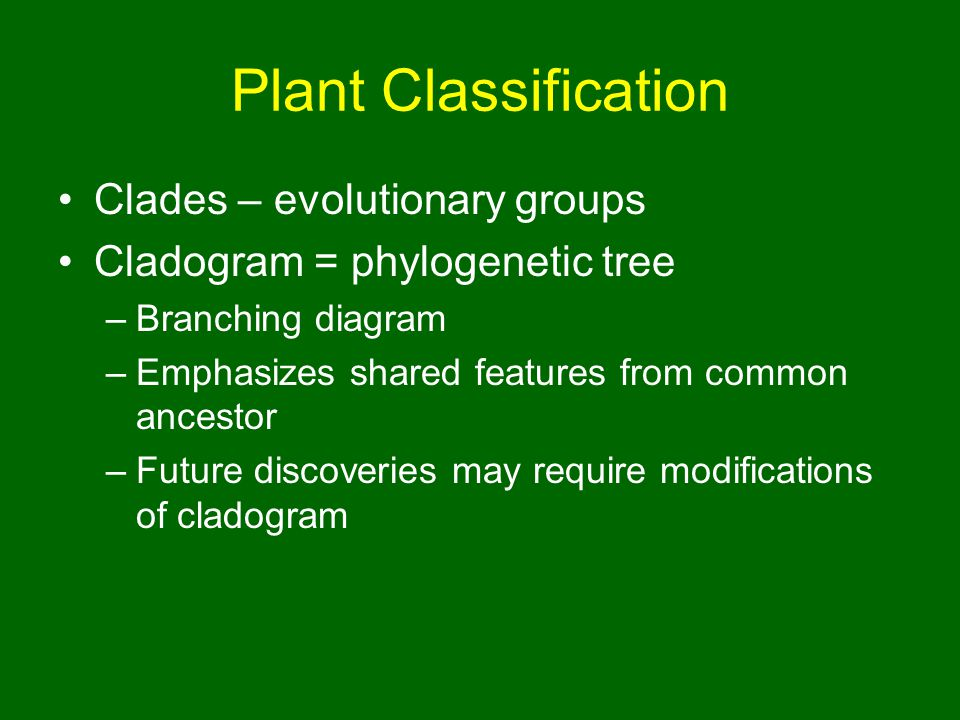 Plant Classification Clades – evolutionary groups