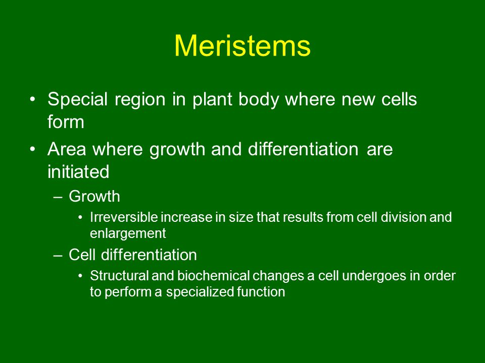Meristems Special region in plant body where new cells form