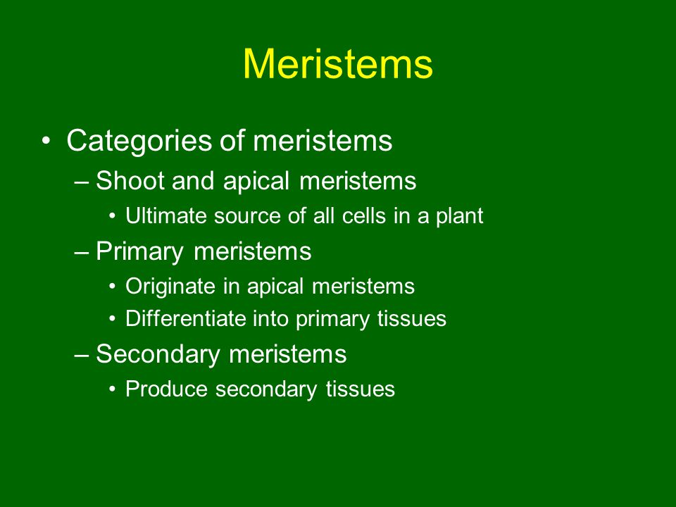 Meristems Categories of meristems Shoot and apical meristems