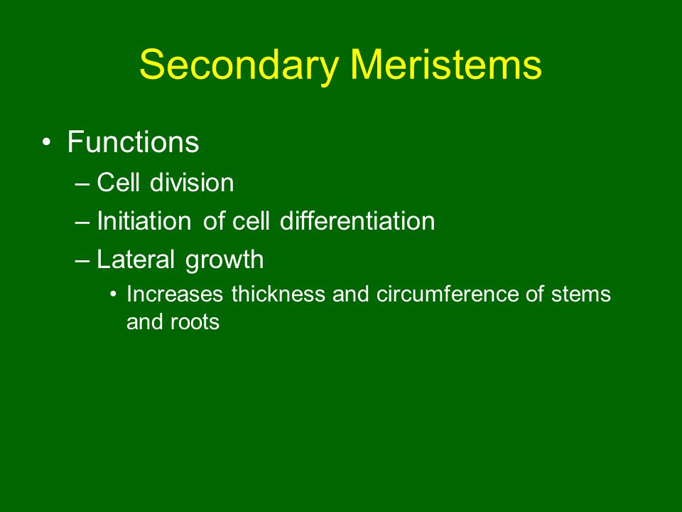 Secondary Meristems Functions Cell division