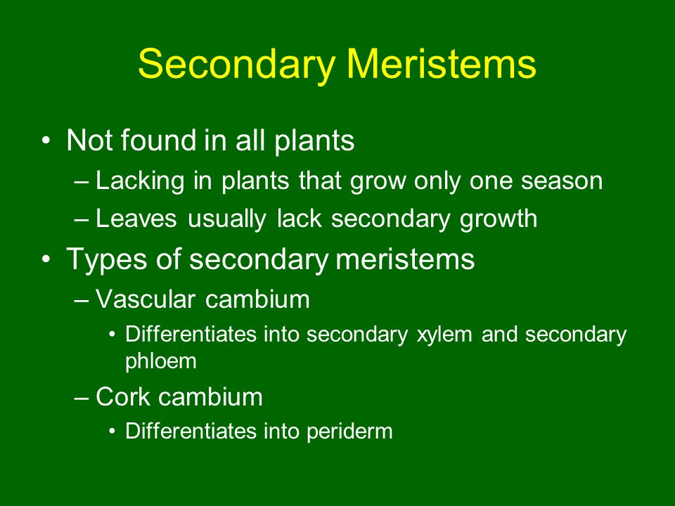 Secondary Meristems Not found in all plants