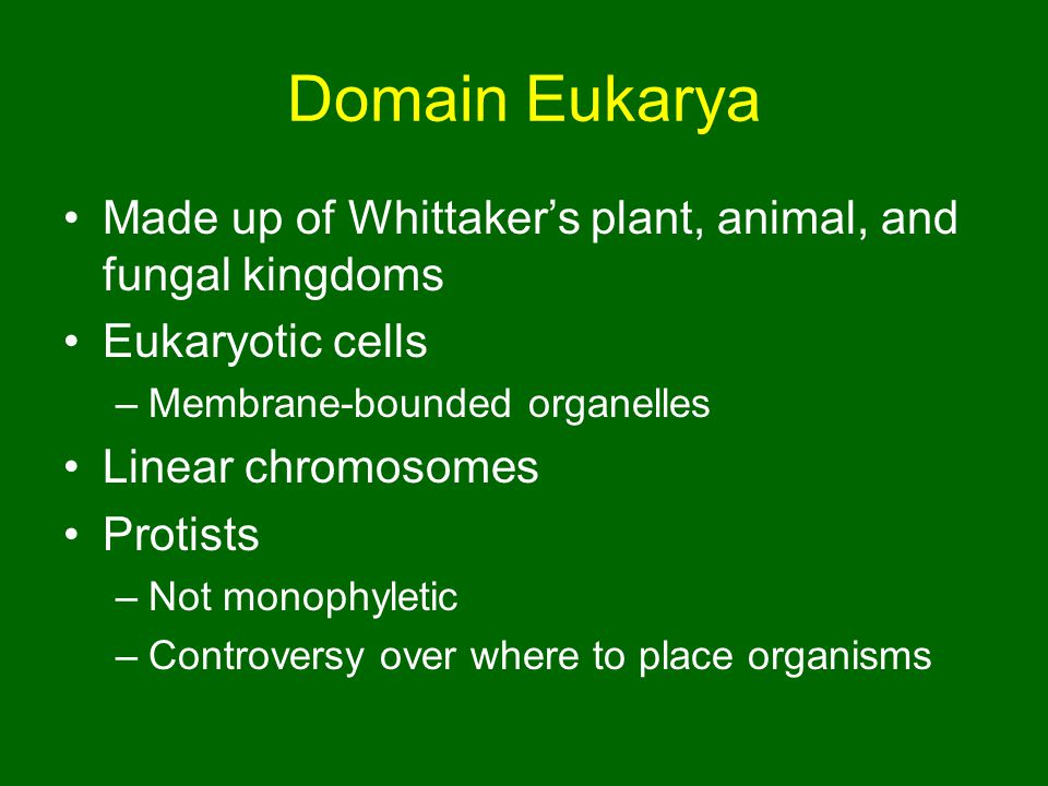 Domain Eukarya Made up of Whittaker's plant, animal, and fungal kingdoms. Eukaryotic cells. Membrane-bounded organelles.