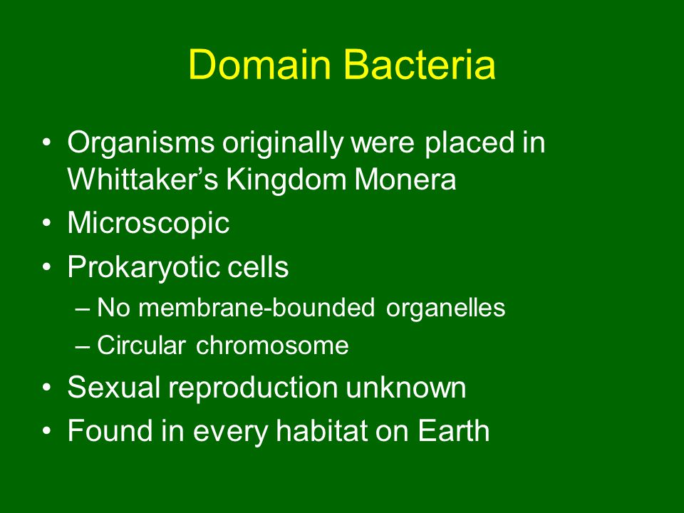 Domain Bacteria Organisms originally were placed in Whittaker's Kingdom Monera. Microscopic. Prokaryotic cells.