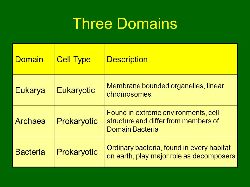 Three Domains Domain Cell Type Description Eukarya Eukaryotic Archaea