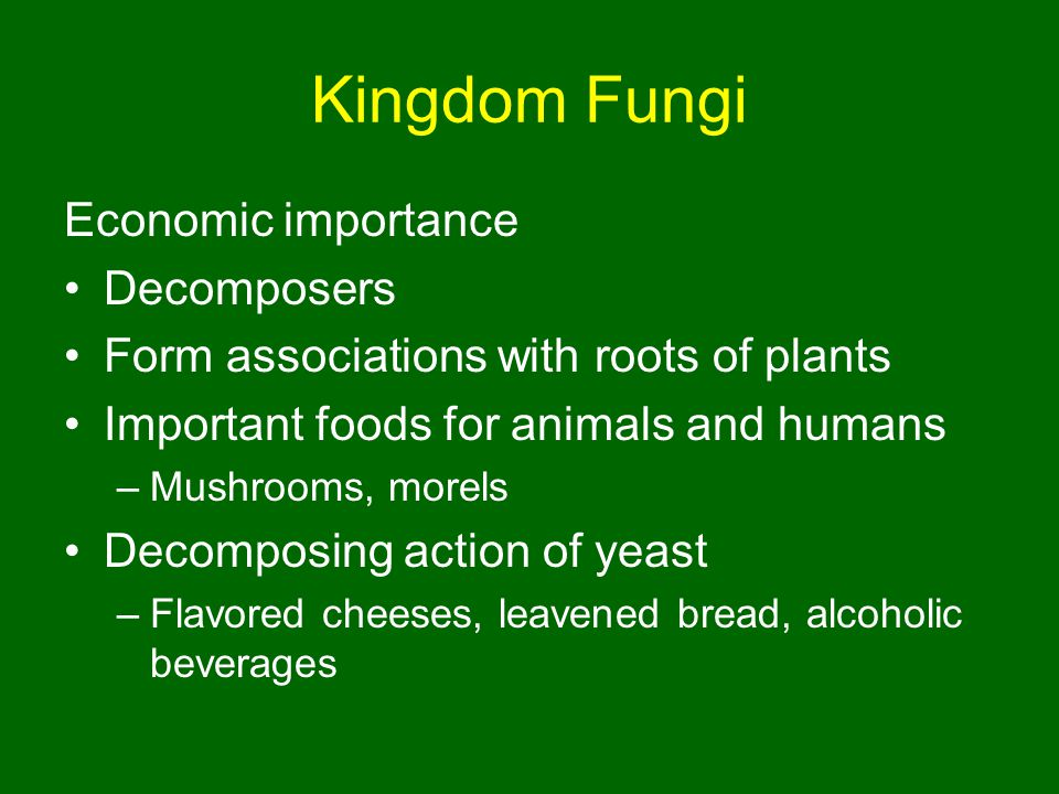 Kingdom Fungi Economic importance Decomposers