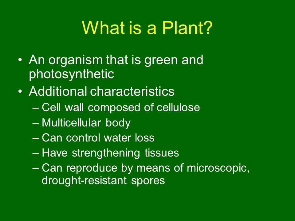 What is a Plant An organism that is green and photosynthetic
