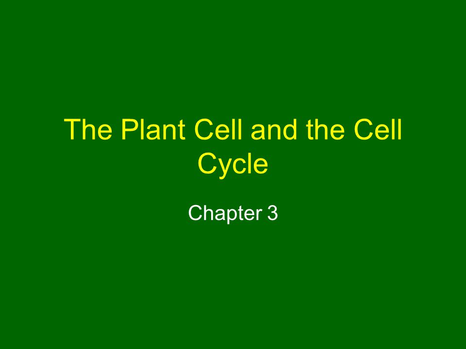 The Plant Cell and the Cell Cycle