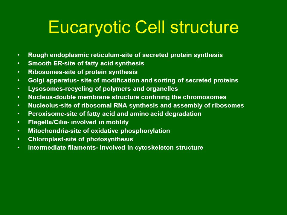 Eucaryotic Cell structure