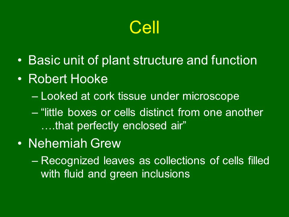 Cell Basic unit of plant structure and function Robert Hooke