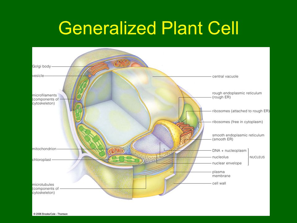 Generalized Plant Cell