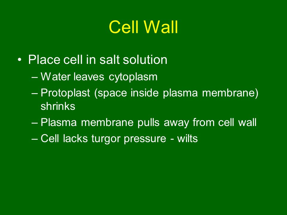 Cell Wall Place cell in salt solution Water leaves cytoplasm