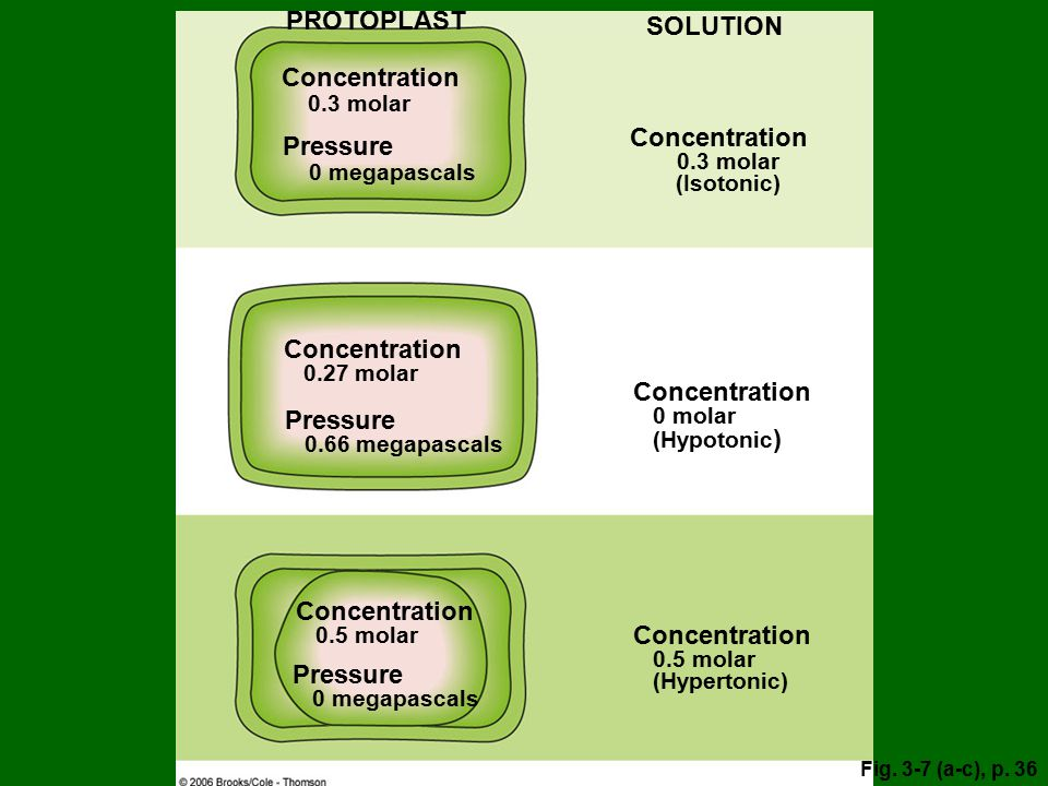 PROTOPLAST SOLUTION Concentration 0.3 molar Concentration Pressure