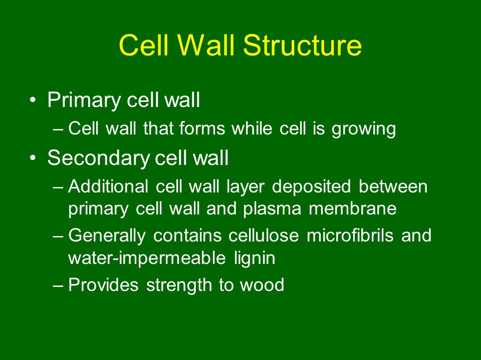 Cell Wall Structure Primary cell wall Secondary cell wall