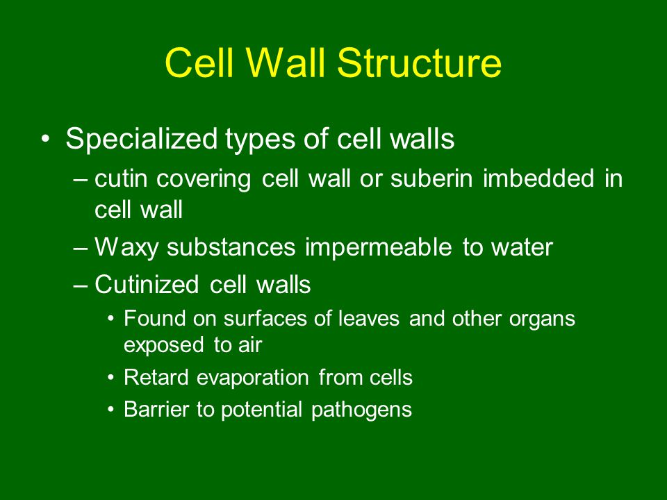 Cell Wall Structure Specialized types of cell walls