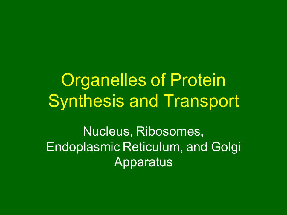 Organelles of Protein Synthesis and Transport