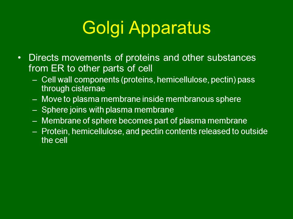 Golgi Apparatus Directs movements of proteins and other substances from ER to other parts of cell.