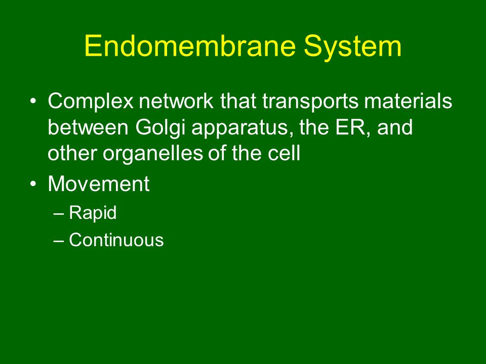 Endomembrane System Complex network that transports materials between Golgi apparatus, the ER, and other organelles of the cell.