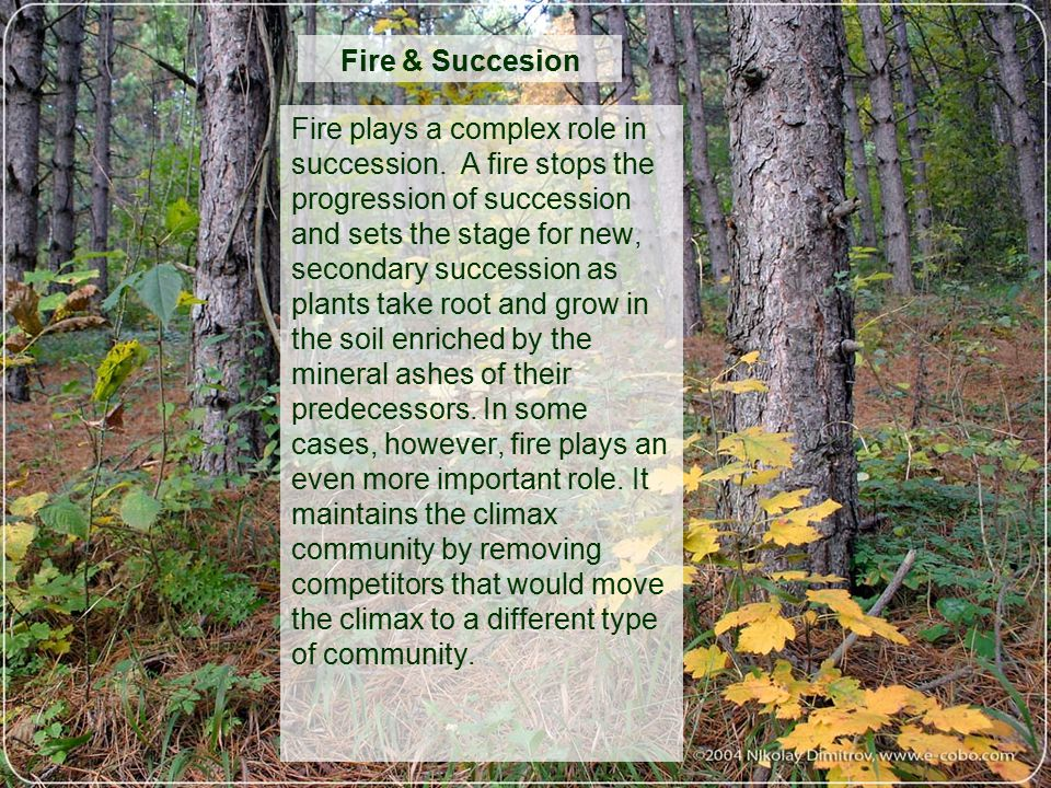 An examination of the role of fire in an ecosystem