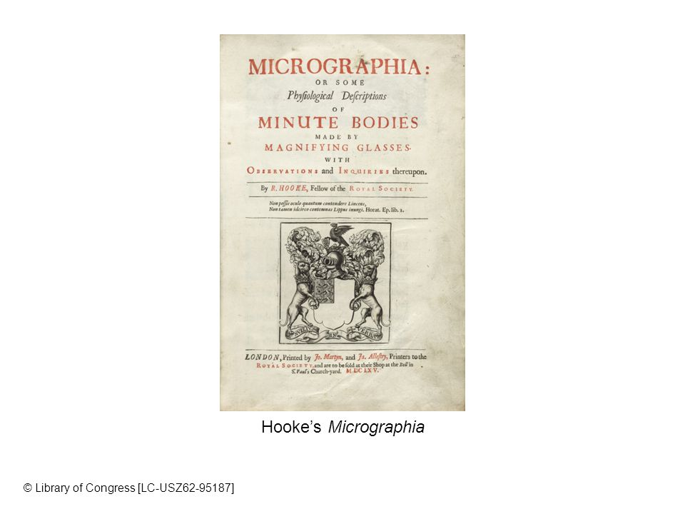 Hooke's Micrographia © Library of Congress [LC-USZ ]