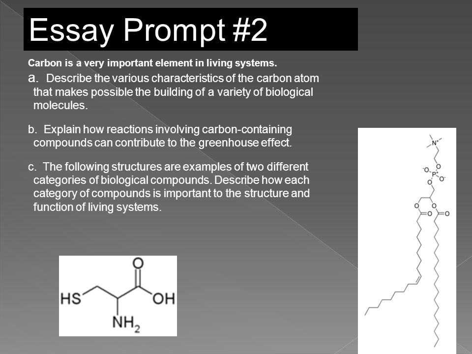 ap biology protein synthesis essay rubric