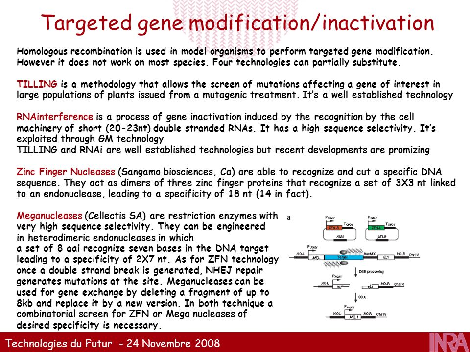 Targeted gene modification/inactivation