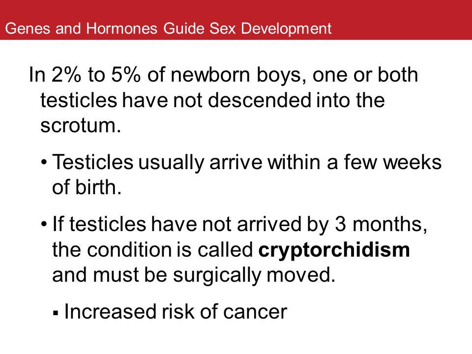 Genes and Hormones Guide Sex Development