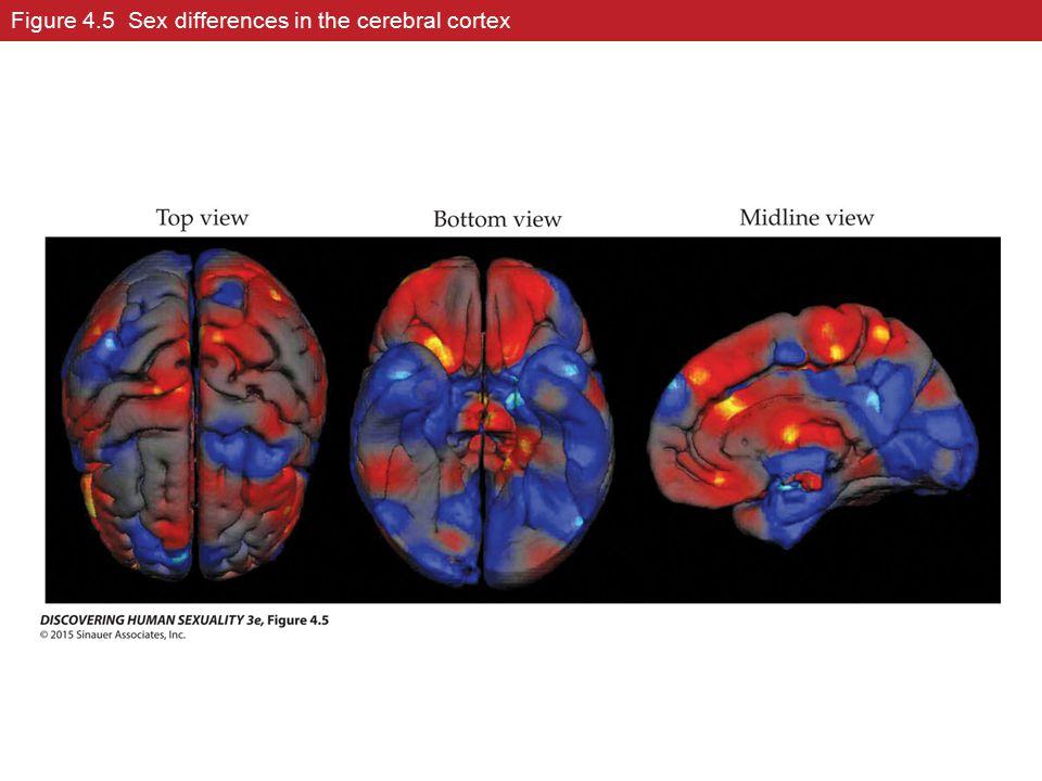 Figure 4.5 Sex differences in the cerebral cortex