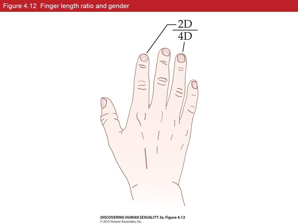 Figure 4.12 Finger length ratio and gender