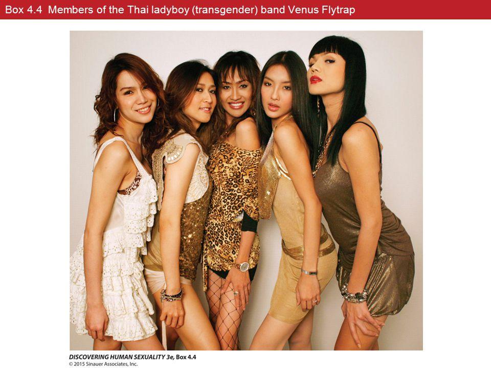 Box 4.4 Members of the Thai ladyboy (transgender) band Venus Flytrap
