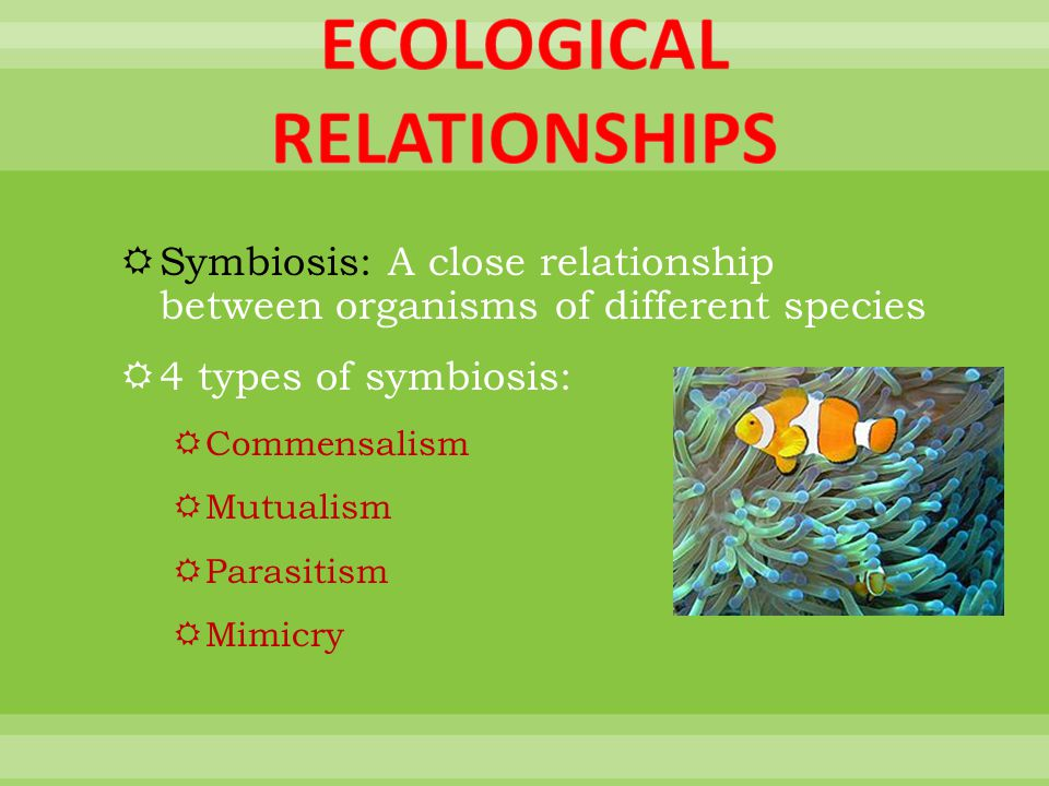 a look at symbiotic relationships between organisms Symbiotic relationships presentation developed for use with the good buddies activity available from project wild symbiosis review between the two organisms before laying down the set of cards and his turn is over other.
