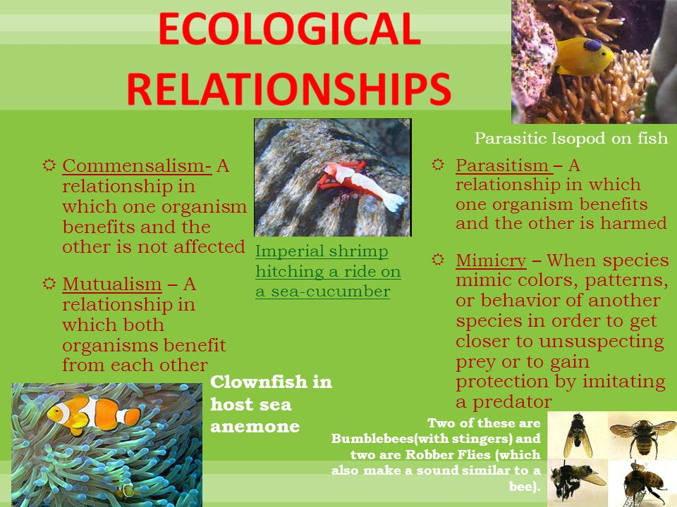 ecological relationship of echinoderms to other organism