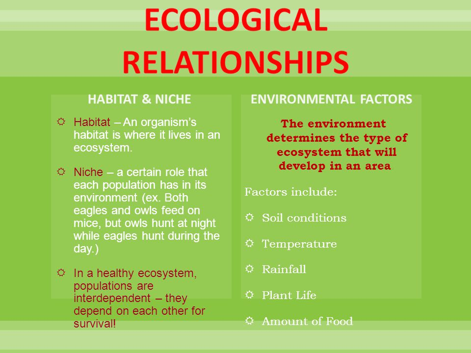 relationship of the ecosystem