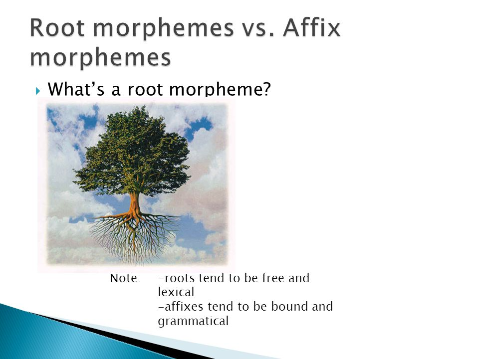morphology affix and inflectional morphemes inflectional 2015-5-13  morphological processes  stem than inflectional morphemes form-al-itie-s  • the presence of inflectional morphology implies.